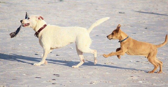 koirat kaksi