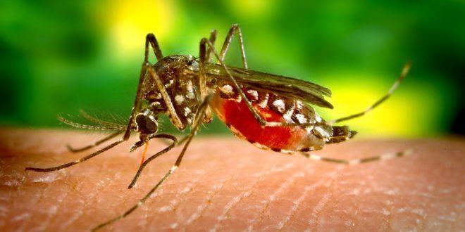 Hyttyskarkoitteiden on estettävä pistot