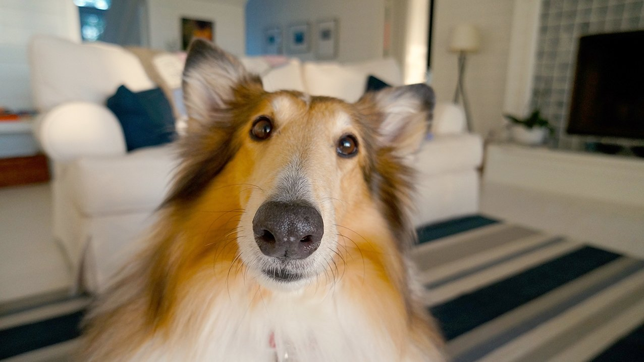 Sinilevä Koira