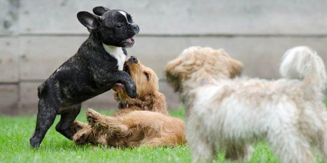 Koiria kiusaa sinilevä, käärmeet, punkit ja helle