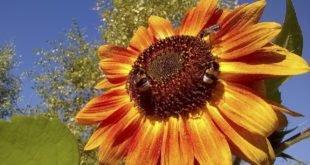 Luonnonmukaisesti rikkakasvien ja ötököiden torjuntaa